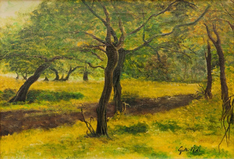 Uliveto - Olive grove - Image 0