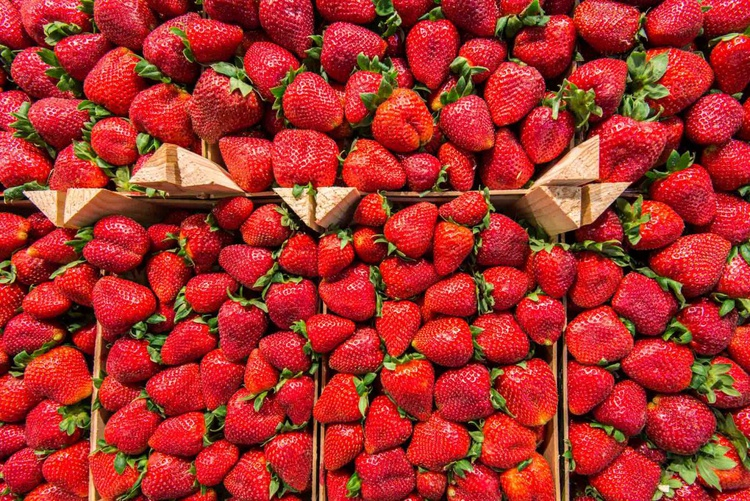 Strawberries  - Limited Edition Print - Image 0