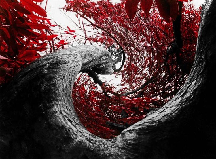 TWISTED TREE - Image 0