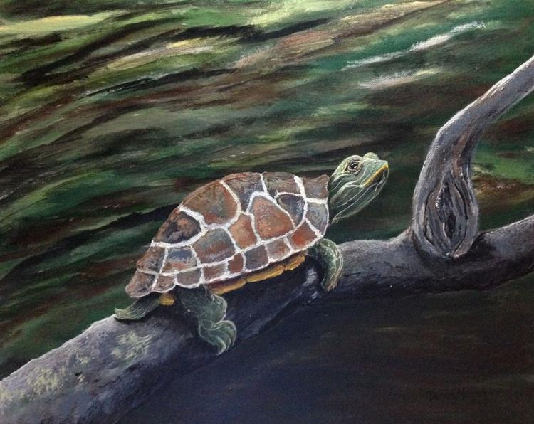 Sunning Turtle - Image 0