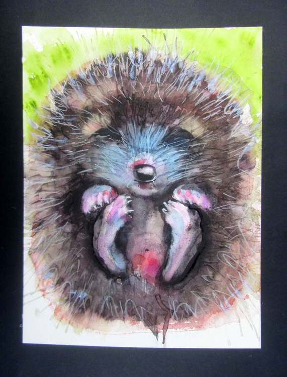 Baby Hedgehog - Image 0