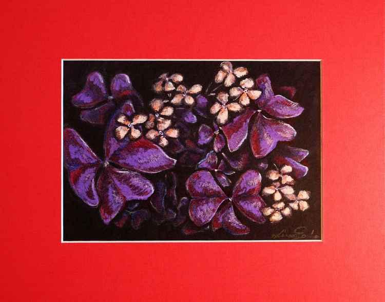 Brazilian butterfly plant -