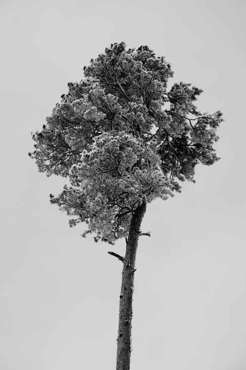 Tree -