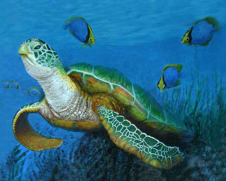 Green Sea Turtle -