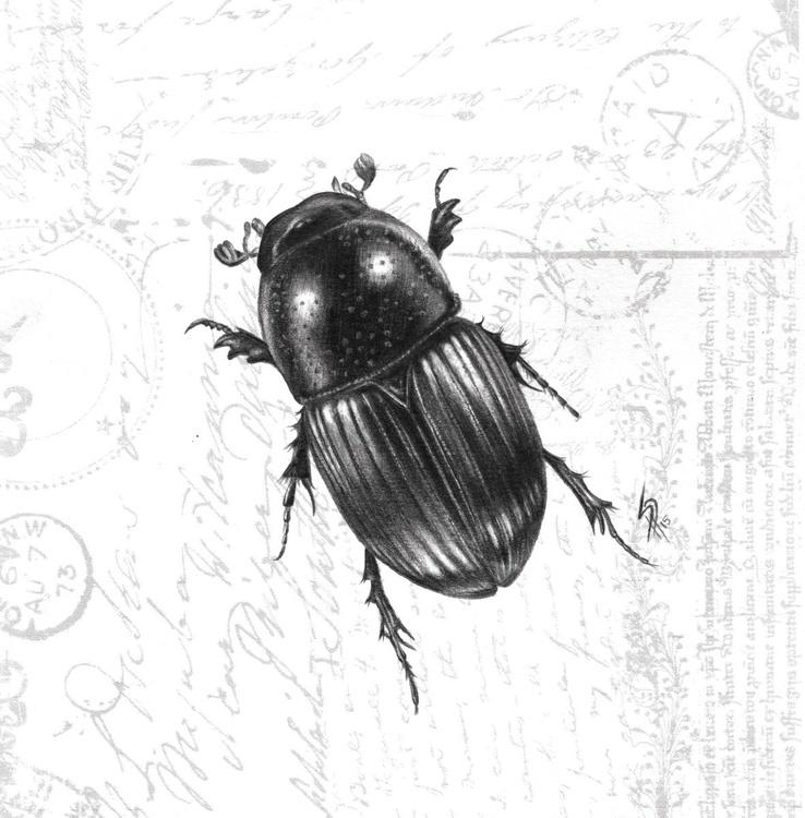 Beetle - Image 0