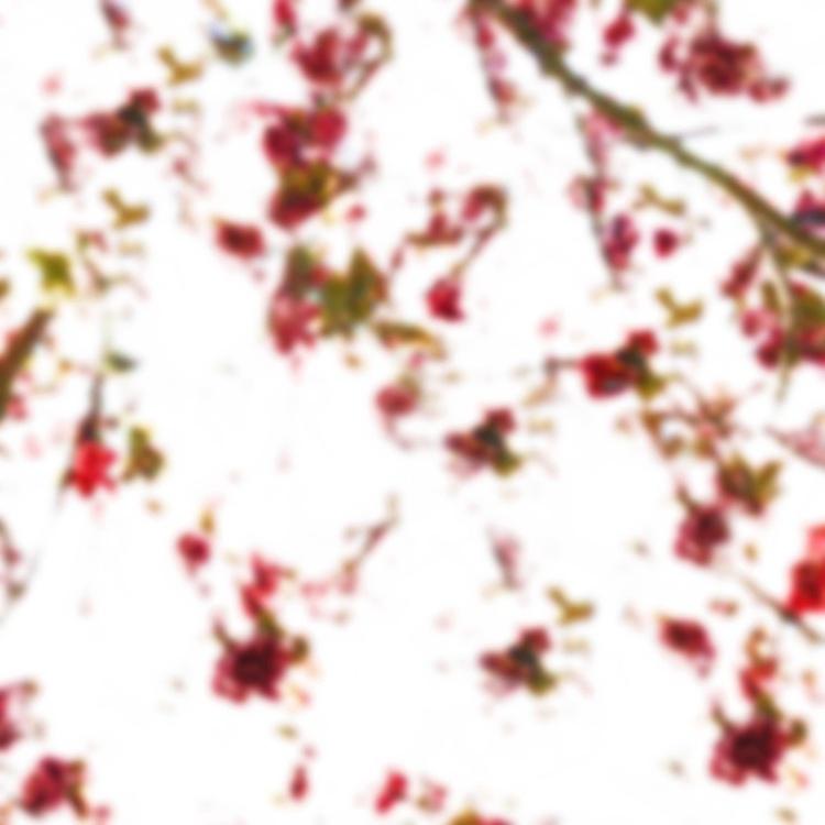 Blossom (Phosphene Flowers Series) - Image 0