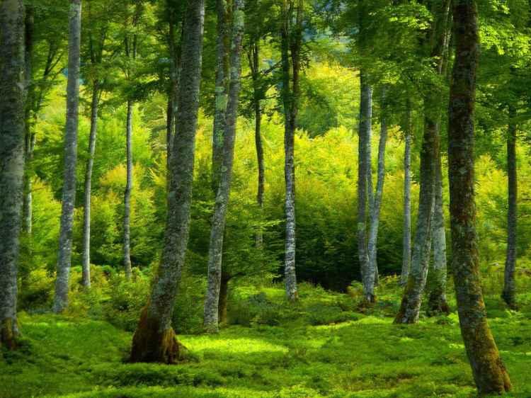 GREEN......................
