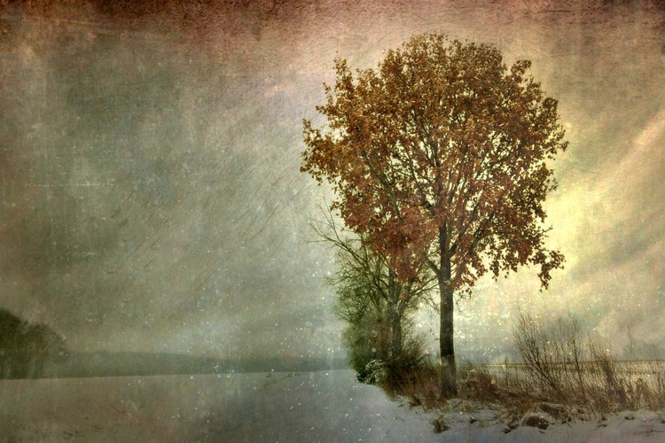 Gentle Touch of Winter - Image 0