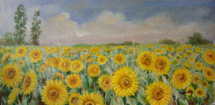 Endless summer fields -