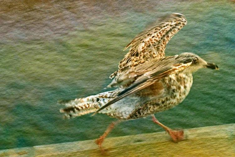 On the Run - Canvas 75 x 50 cm - Image 0