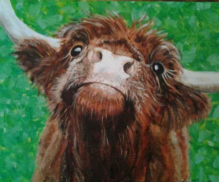 """CHIN UP-2"", acrylic on 30x25x4cm canvas of a cute Highland Cow"