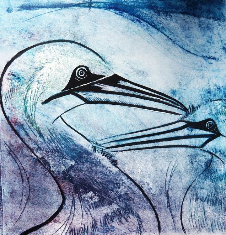 Gannets - Image 0