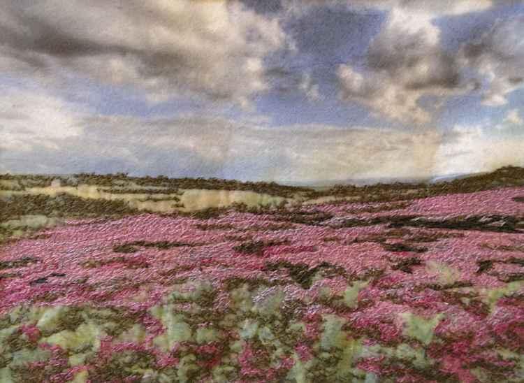 Moorland Heather - Westleton Heath, Suffolk