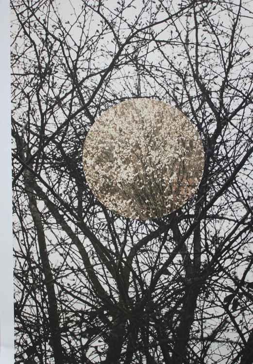 Untitled (Circle#1)