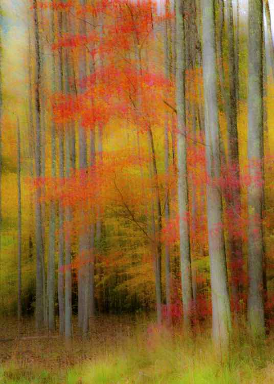 Autumn Impression 1 -