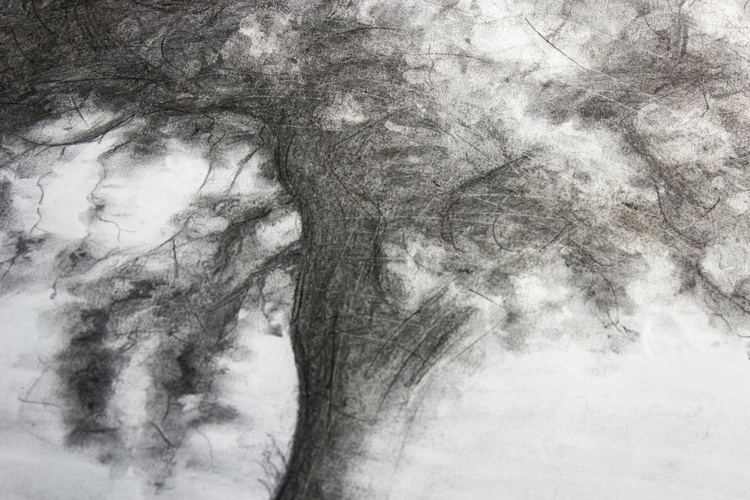 Etude de Chêne - Oak - 50 x 65 cm - Image 0