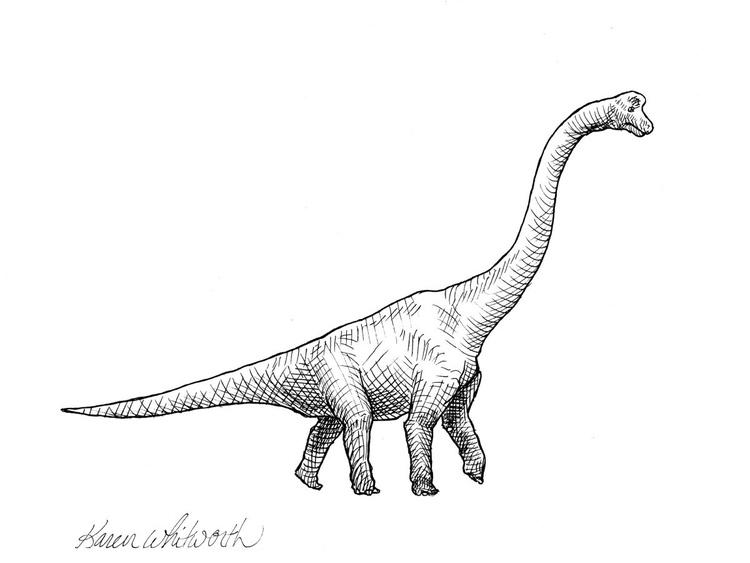 Brachiosaurus - Dinosaur Ink Drawing Illustration - Image 0