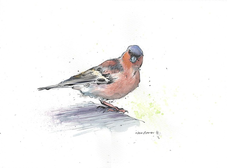 Chaffinch - Daily Bird #52 - Image 0