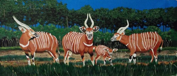 Bongos in Africa - Image 0