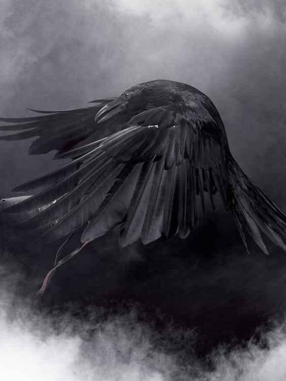 Big Black Raven #3 -