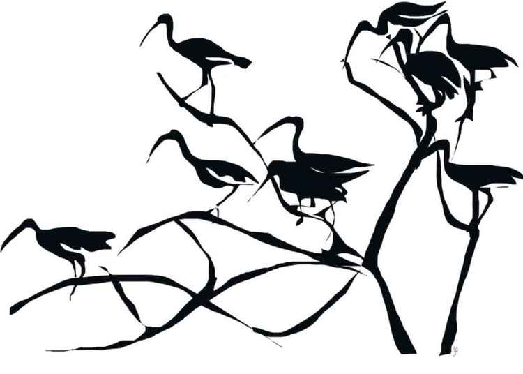 Wood Storks -