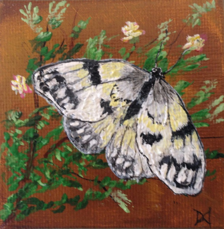 Clouded Sulfur Butterfly - Image 0