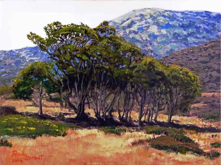 Eucalyptus Grove Catalina