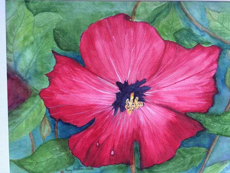 Red Hibiscus -
