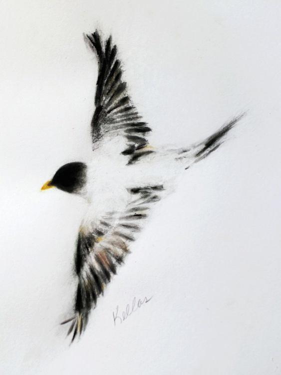 Soaring Bird - Image 0