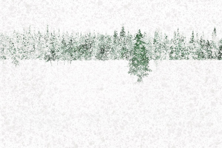 Snow Pines (Ltd Edition of only 20 Fine Art Giclee Prints from original artwork) - Image 0
