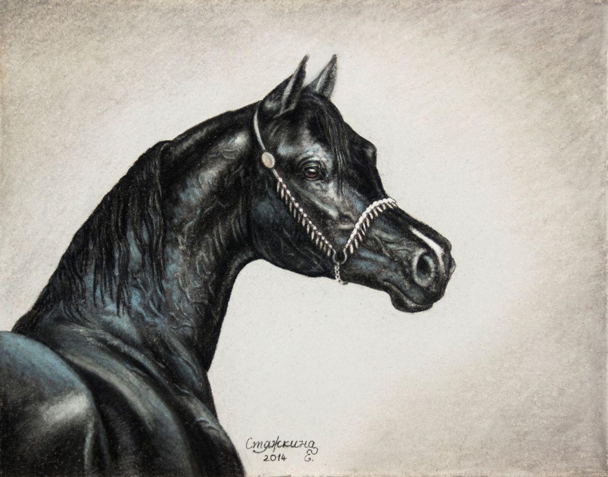 Black arabian horse (2014) Pastel drawing by Ekaterina ...