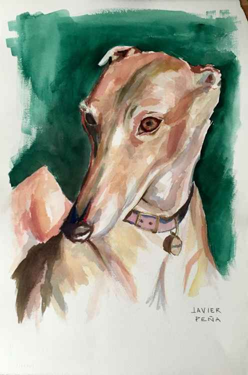 Dominic Greyhound Portrait