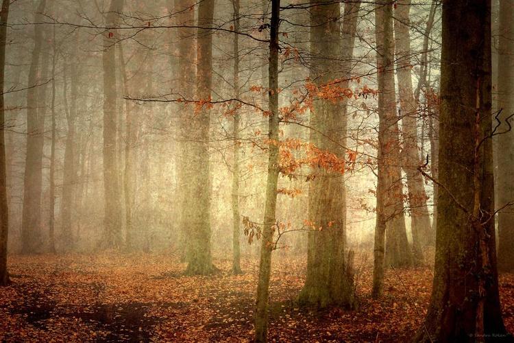 The last Leaves of Autumn - Image 0