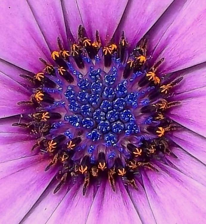Natures Gem I - Image 0