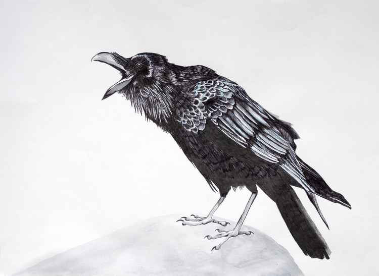 """""""Caw"""" raven drawing"""