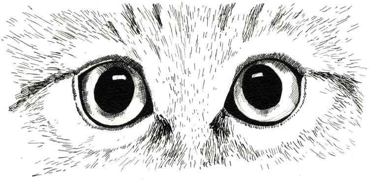 Cat Study 2 -