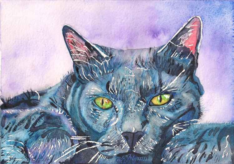 Blue Cat -