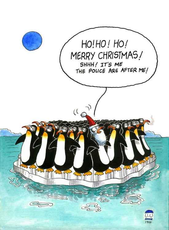 Bird Santa -