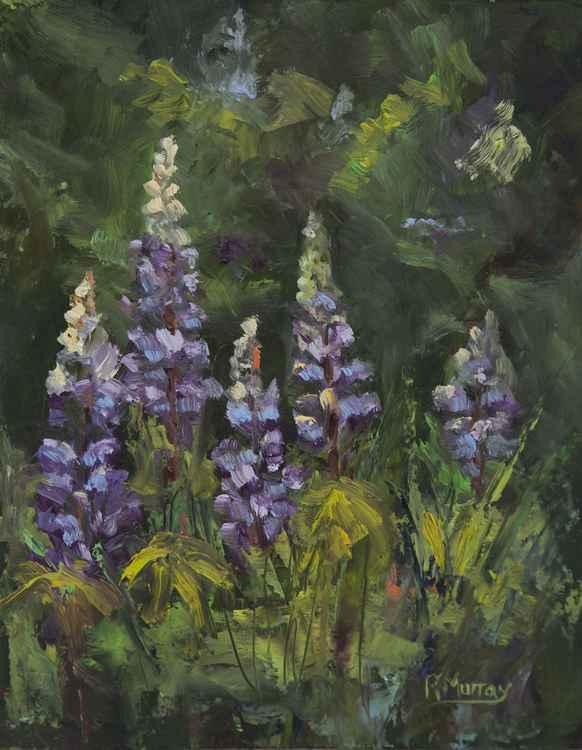 Garden Lupines