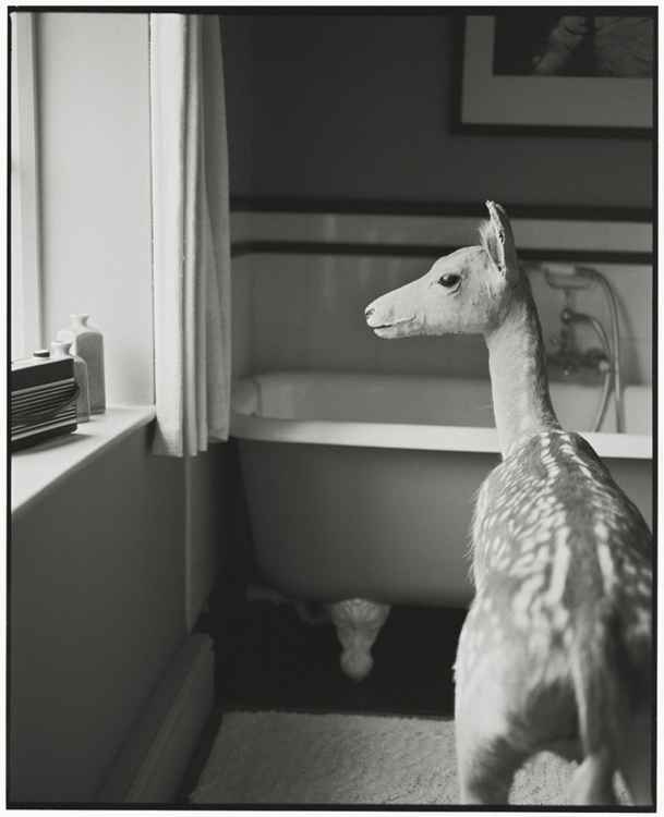 Deer in the Bathroom (Medium size) -