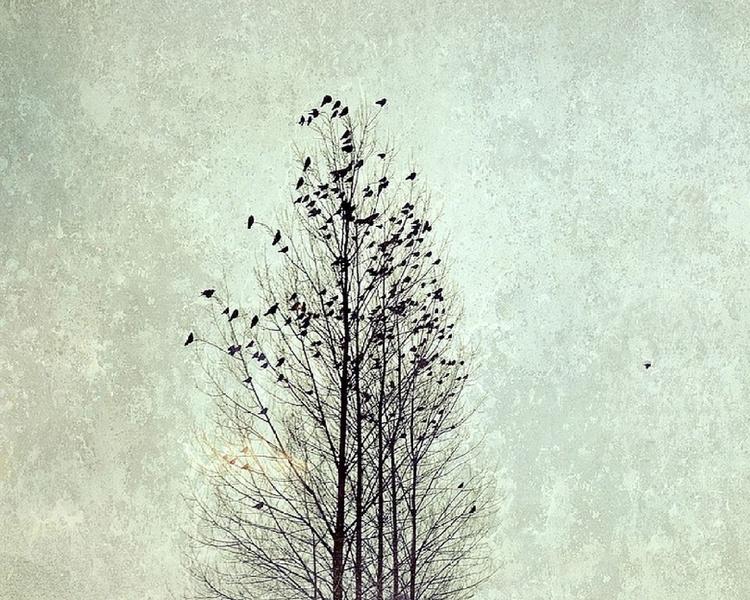 The nest - Image 0