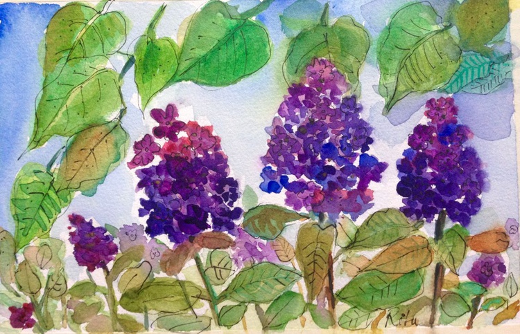 View of my garden lilacs - Image 0