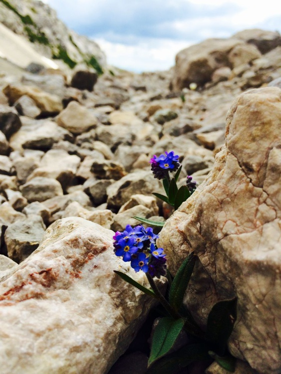 FLOWERS ON THE PATH - Image 0
