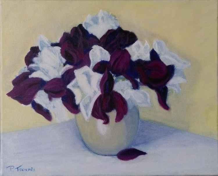 Iris violets et blancs