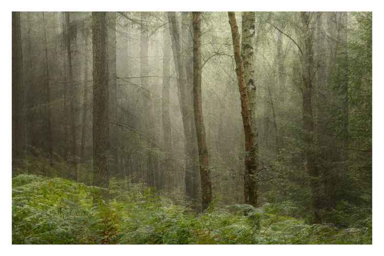 Forest Memory -