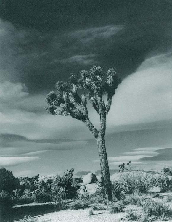 Joshua Tree USA - Image 0