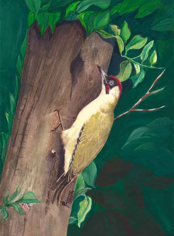 GREEN WOODPECKER ~ -