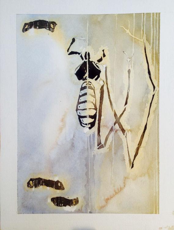 Class Arachnida - Image 0