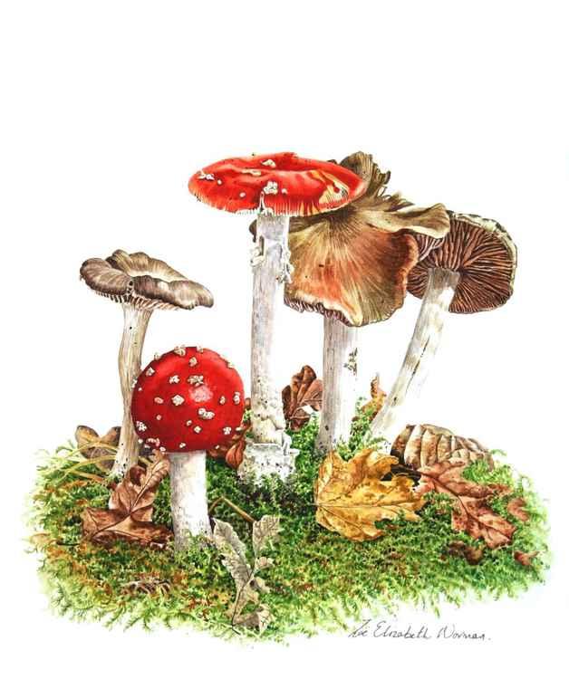 Woodland Mushrooms -