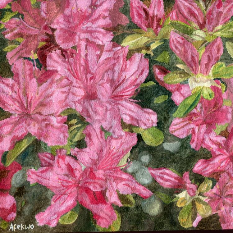 Azalea - Spring blossom - Image 0
